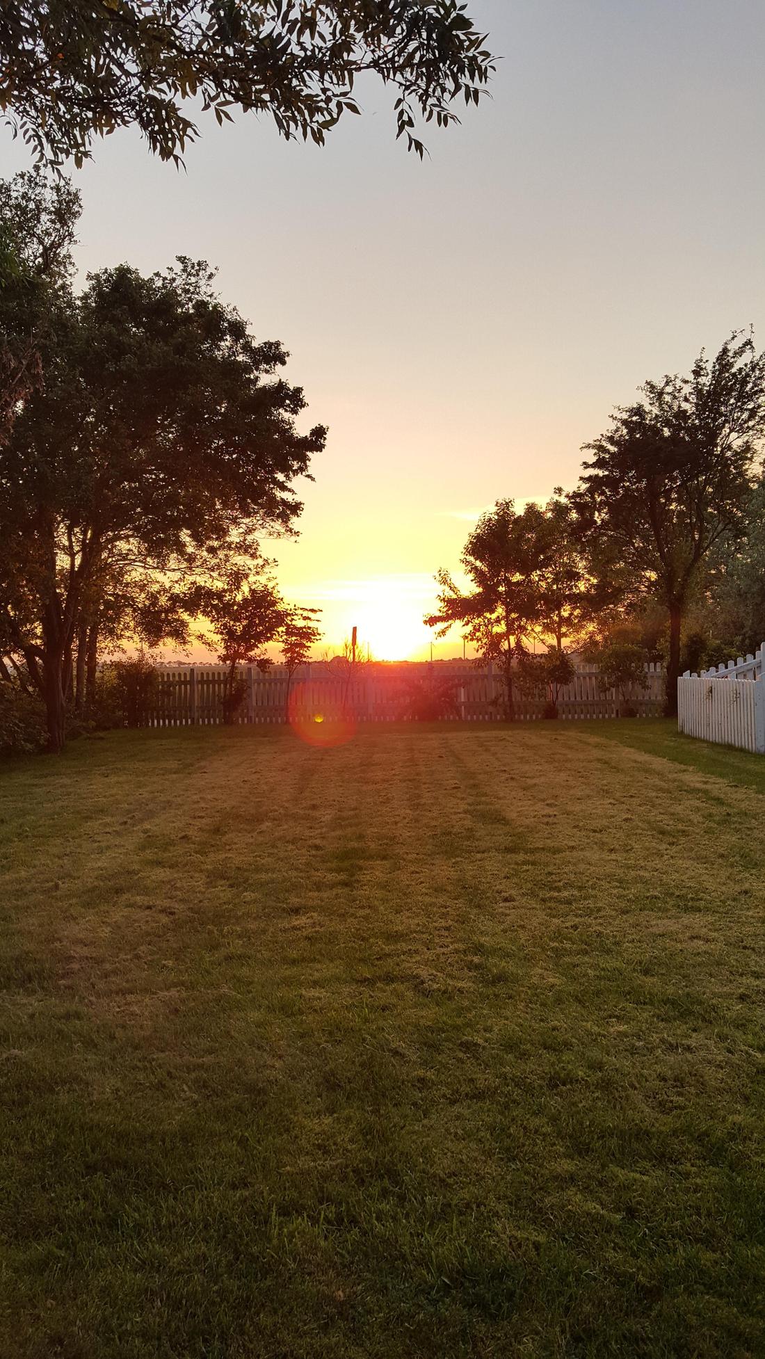 Garten und Wiese in Oldenswort